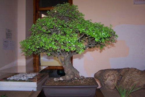 Bonsai 376 - AVBONSAI