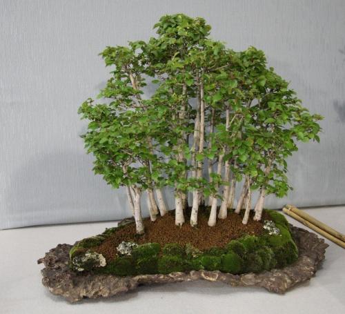 Bonsai 884 - bonsaipaterna