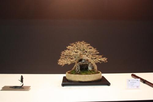 Bonsai Acer Burgerianum - Reg Bolton - EBA Lorca