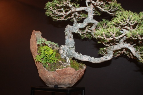 Bonsai Pino Silvestre - Luis Vallejo - EBA Lorca