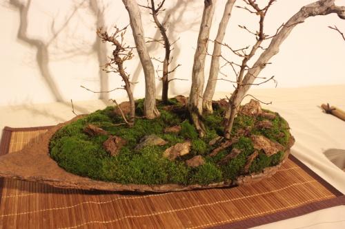 Bonsai Bosque de Carpes - Troncos - CBALICANTE