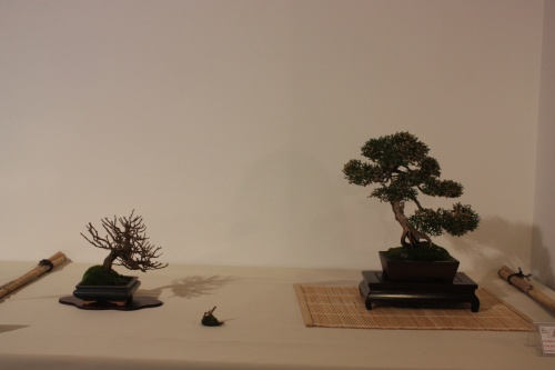 Bonsai Composición - CBALICANTE