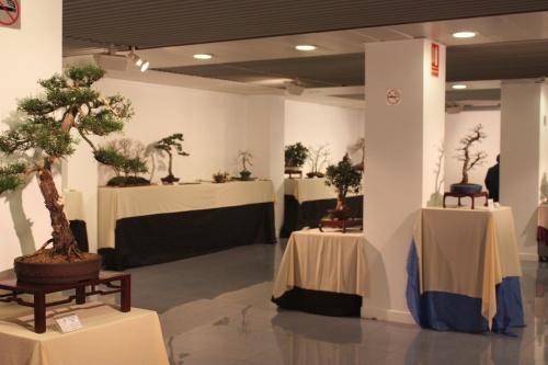 Bonsai Sala Exposiciones 3 - CBALICANTE