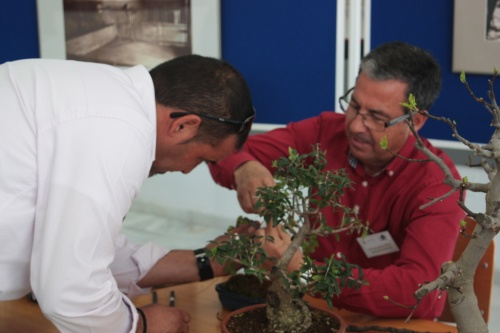 Bonsai Pedro ayudando a Jose Gomez del Rio - Bonsai Oriol