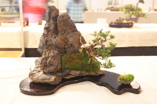 Bonsai Enebro o Juniperus Chinesis sobre Roca - CBALICANTE
