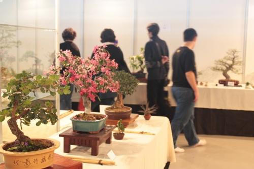 Bonsai Exposición de Bonsais en IFA 2012 - CBALICANTE