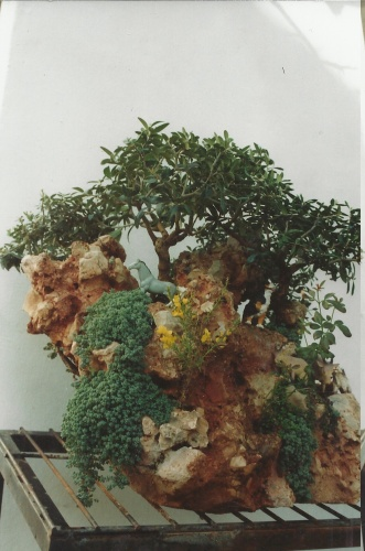 Bonsai 11596 - vicente solbes