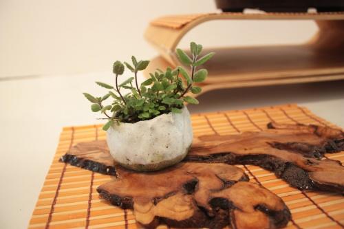 Bonsai kusamono - torrevejense