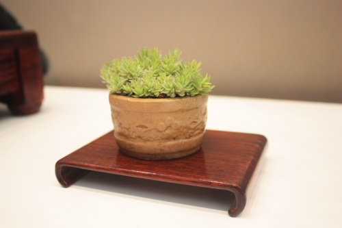 Bonsai kusamono - ovalado - torrevejense