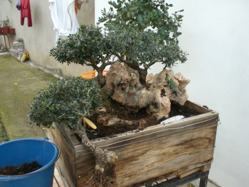 Bonsai 11944 - vicente solbes