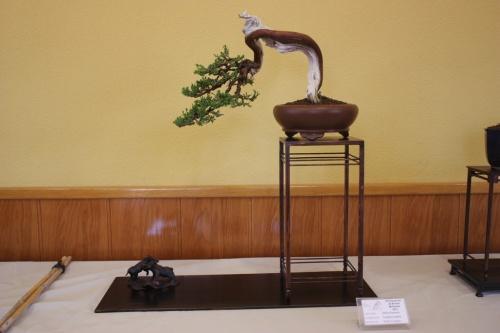 Bonsai Sabina Rastrera en Semicascada ( Juniperus Sabina ) de Pedro Conejero - CBALICANTE