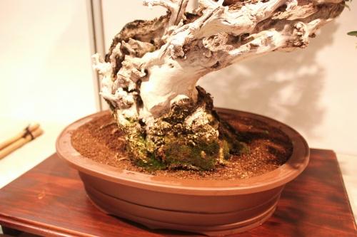 Bonsai Bonsai, Acebuche - Tronco - CBALICANTE
