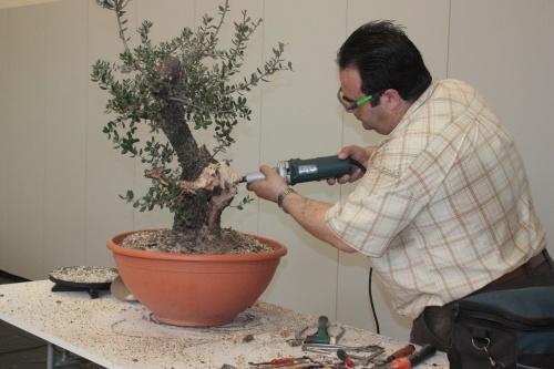 Bonsai Con la DREMEL - Demostración de como se hace un bonsái - torrevejense