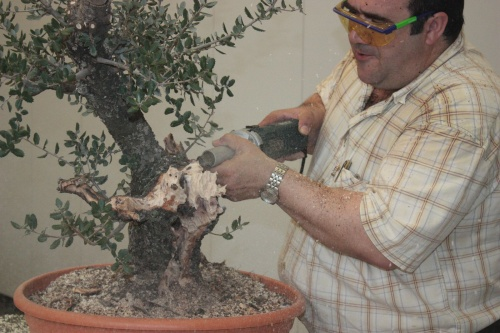 Demostracion de como modelar un bonsai por Antonio Torres