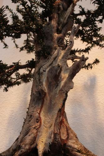 Bonsai Un tronco muy bonito, un buen trabajo - Assoc. Bonsai Muro