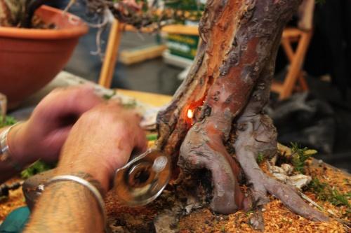 Bonsai Kevin Willson usando un soplete para quemar la madera - torrevejense