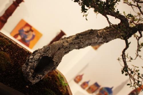 Bonsai 4912 - torrevejense