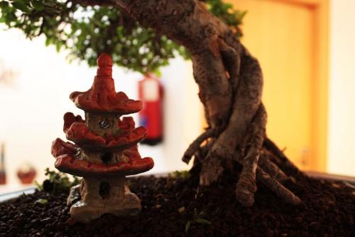 Bonsai Detalle de las raices, y casita japonesa - torrevejense