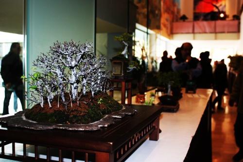 Bonsai 54 Olmos en un bosque - torrevejense
