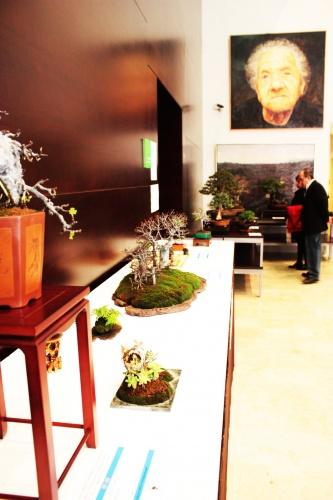 Bonsai Coleccion bonsai Jose Gomez del Rio en Torrevieja 2010 - torrevejense