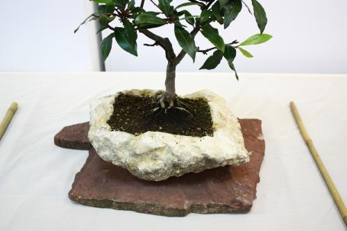 Bonsai Tiesto para bonsai hecho con una Roca - CBALICANTE