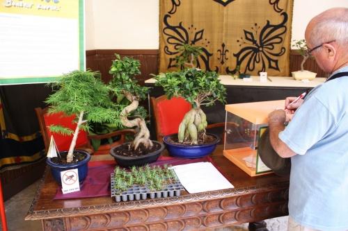 Bonsai Rellenando folleto para el Sorteo de un Bonsai Gratis - Lorca 2010 - Amigos del Bonsai Lorca