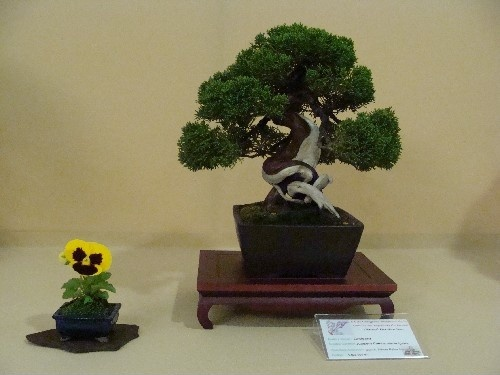 Bonsai Junipero itoigawa - Vila-real