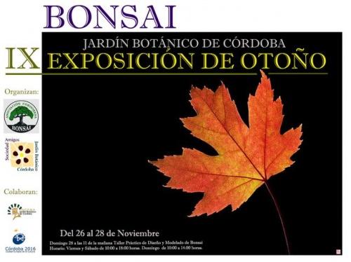 Bonsai Exposicion de Otoño - eventos