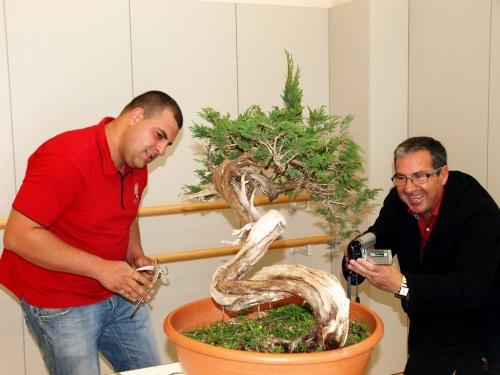 Bonsai Antonio y Jose Gomez del Rio - torrevejense