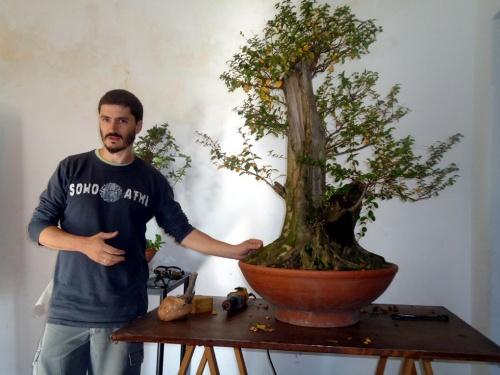 Bonsai 8304 - Andres Bicocca