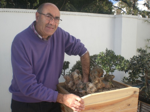 Bonsai comentario sobre olivo sobre piedra lefalta el olivo del centro que forma la copa  - vicente solbes