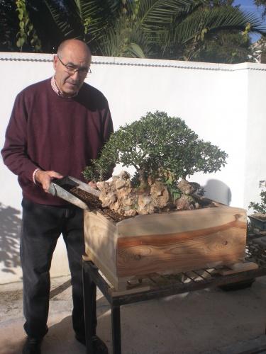 Bonsai olivos sobre piedra. 4 forman una sola copa [#Sin Título#] - vicente solbes