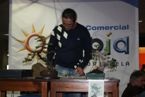 Bonsai Alvaro Vinal en Exposición del Club Bonsai Oriol - 2011 - Bonsai Oriol